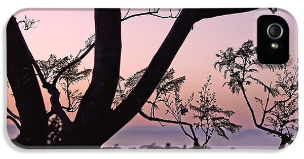 Jacaranda Silhouette IPhone 5s Case by Rona Black