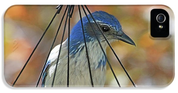 Bluejay iPhone 5s Case - Jail Bird by Donna Kennedy