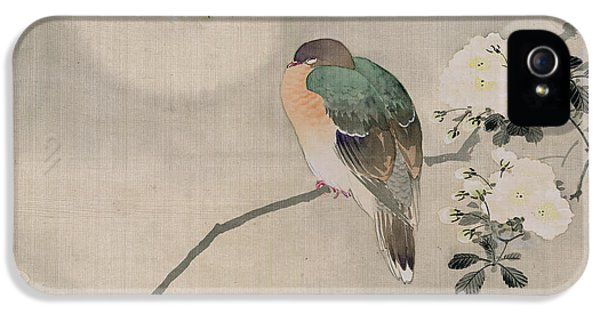 Japanese Silk Painting Of A Wood Pigeon IPhone 5s Case by Japanese School
