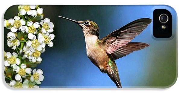Humming Bird iPhone 5s Case - Just Looking by Christina Rollo