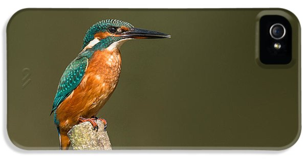 Kingfisher iPhone 5s Case - Kingfisher by Ian Hufton