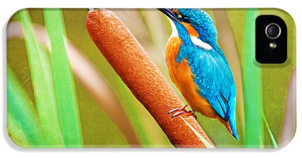 Kingfisher iPhone 5s Case - Kingfisher by Laura D Young