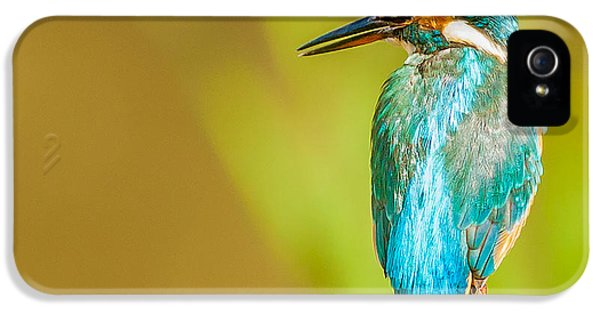 Kingfisher IPhone 5s Case