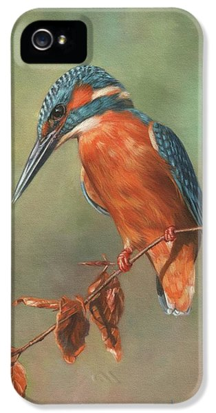Kingfisher iPhone 5s Case - Kingfisher Perched by David Stribbling