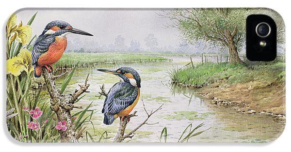 Kingfisher iPhone 5s Case - Kingfishers On The Riverbank by Carl Donner