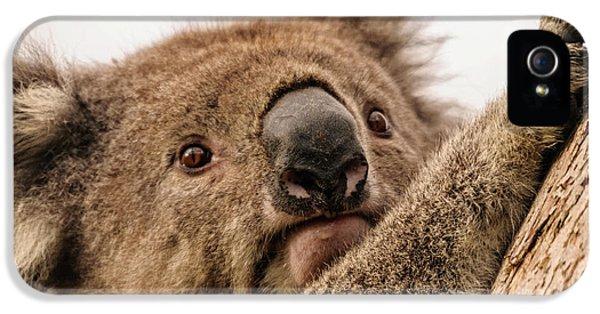 Koala 3 IPhone 5s Case