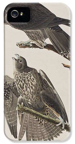 Labrador Falcon IPhone 5s Case by John James Audubon