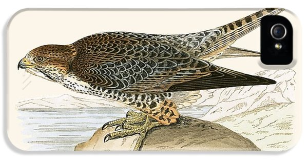 Lanner Falcon IPhone 5s Case by English School