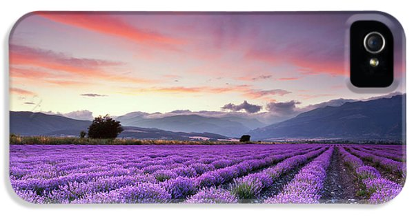 Rural Scenes iPhone 5s Case - Lavender Season by Evgeni Dinev