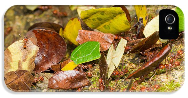 Leaf-cutter Ants IPhone 5s Case by B.G. Thomson