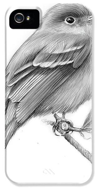 Flycatcher iPhone 5s Case - Least Flycatcher by Greg Joens