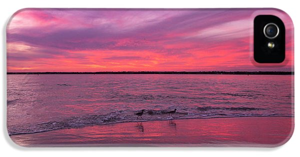 Sandpiper iPhone 5s Case - Leave Us To Dream 2 by Betsy Knapp