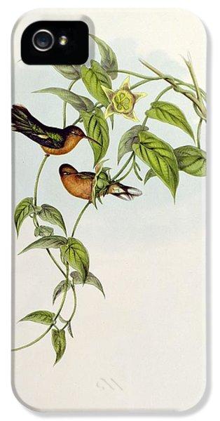 Lovebird iPhone 5s Case - Leucippus Fallax by John Gould