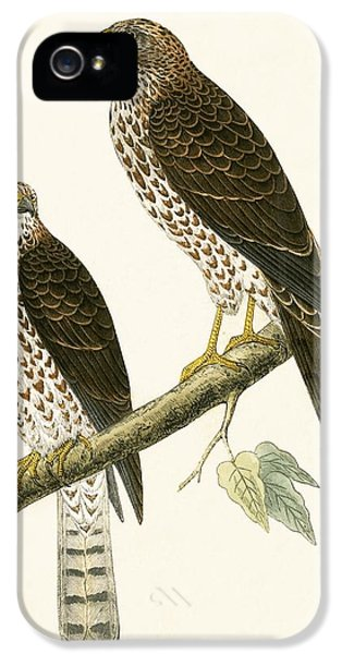 Levant Sparrow Hawk IPhone 5s Case by English School