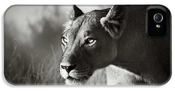 Portraits iPhone 5s Case - Lioness Stalking by Johan Swanepoel