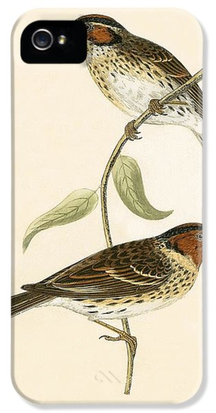 Little Bunting IPhone 5s Case