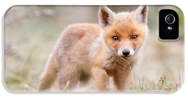 Fox iPhone 5s Case - Little Fox Kit, Big World by Roeselien Raimond