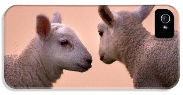 Sheep iPhone 5s Case - Little Gossips by Angel Ciesniarska