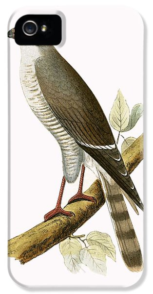 Little Red Billed Hawk IPhone 5s Case by English School