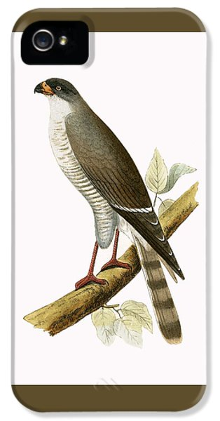 Little Red Billed Hawk IPhone 5s Case