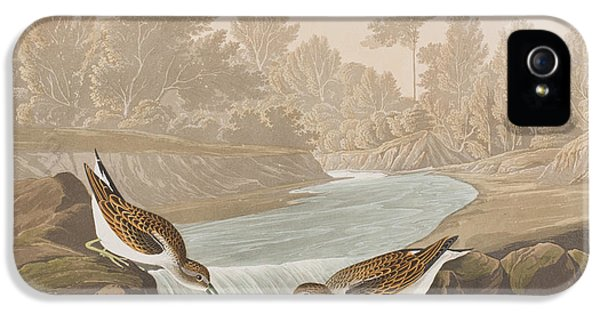 Little Sandpiper IPhone 5s Case by John James Audubon