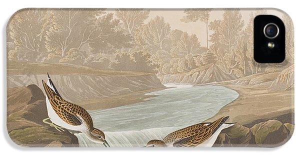 Little Sandpiper IPhone 5s Case by John James Audubon