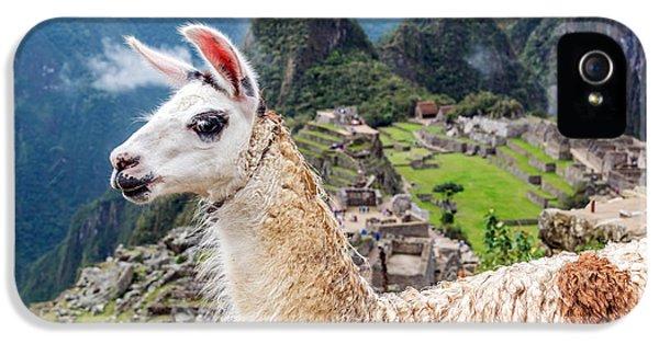 Llama At Machu Picchu IPhone 5s Case by Jess Kraft