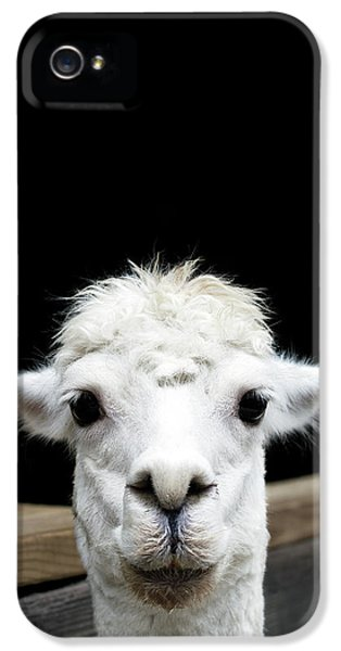 Llama IPhone 5s Case by Lauren Mancke