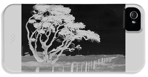 Lone Tree, West Coast IPhone 5s Case by Nareeta Martin