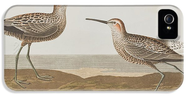 Long-legged Sandpiper IPhone 5s Case by John James Audubon