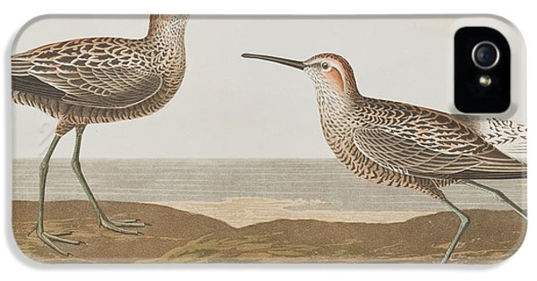 Long-legged Sandpiper IPhone 5s Case by John James Audubon
