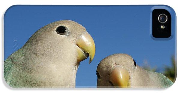 Lovebird iPhone 5s Case - Love Birds 2 by Ernie Echols