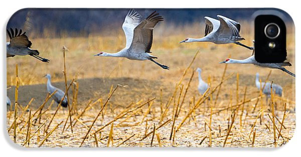 Low Level Flyby IPhone 5s Case by Mike Dawson
