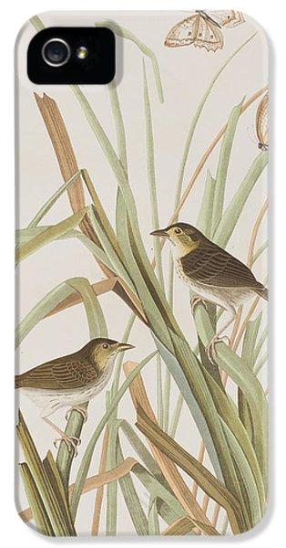 Macgillivray's Finch  IPhone 5s Case by John James Audubon