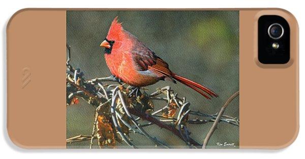 Male Cardinal IPhone 5s Case