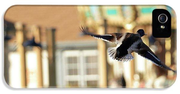 Mallard Duck And Carousel IPhone 5s Case