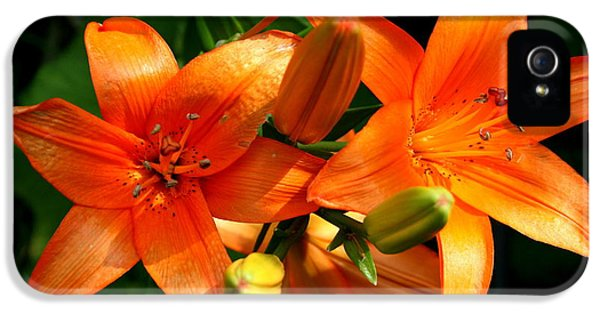 Floral iPhone 5s Case - Marmalade Lilies by David Dunham