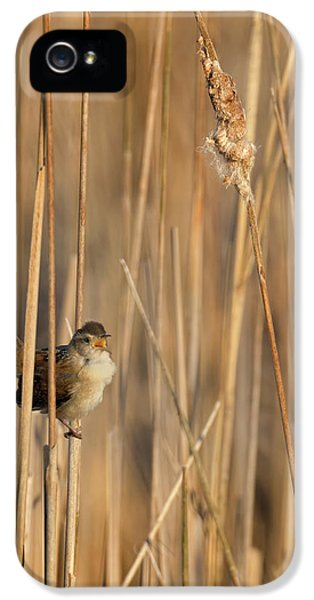 Marsh Wren IPhone 5s Case