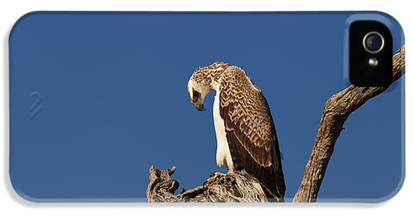 Eagle iPhone 5s Case - Martial Eagle by Johan Swanepoel