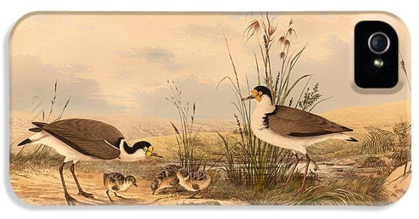 Masked Lapwing IPhone 5s Case by Mountain Dreams