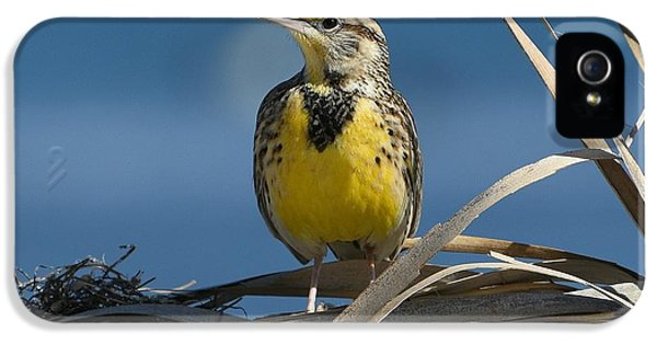 Meadowlark iPhone 5s Case - Meadowlark Beauty by Fraida Gutovich