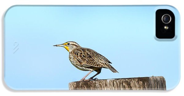 Meadowlark iPhone 5s Case - Meadowlark Roost by Mike Dawson
