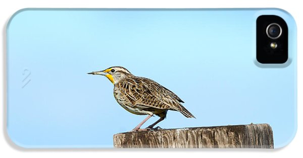 Meadowlark Roost IPhone 5s Case by Mike Dawson