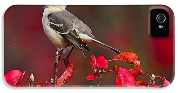 Mockingbird iPhone 5s Case - Mockingbird On Red by William Jobes
