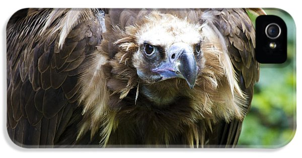 Monk Vulture 3 IPhone 5s Case by Heiko Koehrer-Wagner