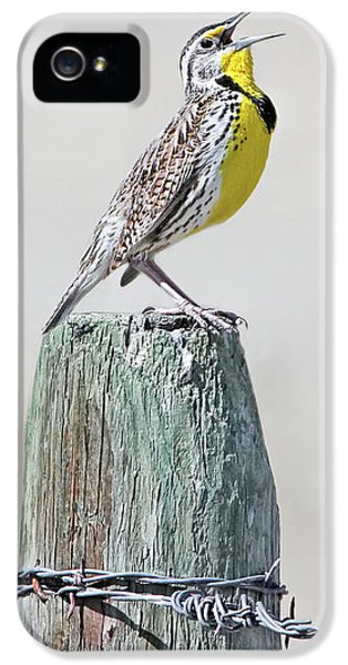 Meadowlark iPhone 5s Case - Montana Meadowlark's Spring Song by Jennie Marie Schell