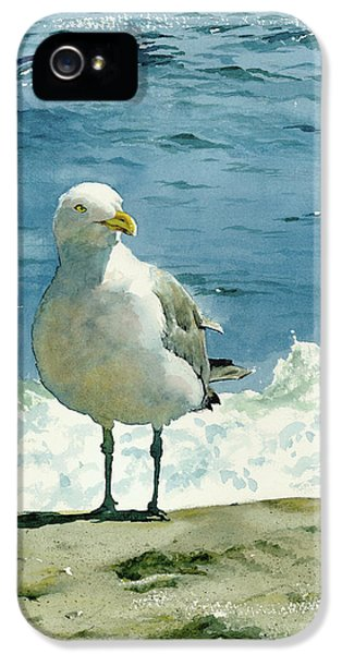 Montauk Gull IPhone 5s Case