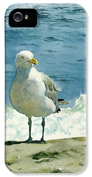 Beach iPhone 5s Case - Montauk Gull by Tom Hedderich