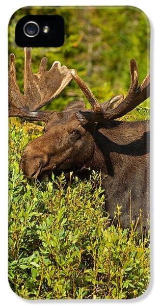 Moose IPhone 5s Case