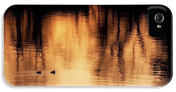 IPhone 5s Case featuring the photograph Morning Ducks 2017 by Bill Wakeley